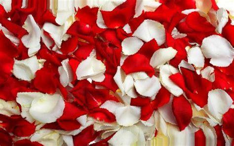 sognare fiori significato petali interpretazione dei sogni romoletto