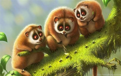 cute nature animals wallpapers hd  full hd wallpapers