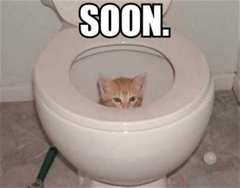 Funny Toilet Memes - a cat in the toilet soon meme dump a day