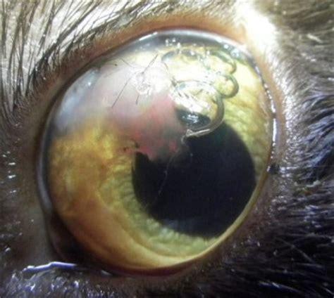 Rood oog behandeling