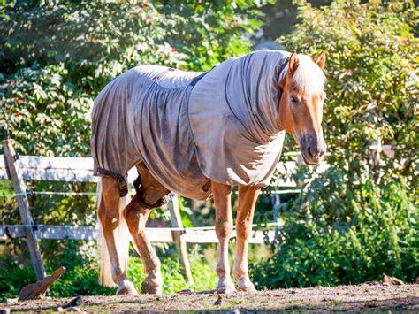 sommerekzem beim pferd ursachen und behandlung