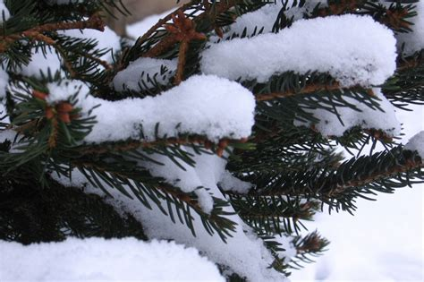 Ziemas dzejolītis (Andris Zauers)