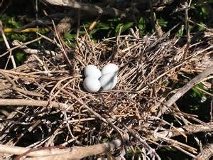 Blue File Cabinet by Snowy Egret Nest