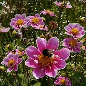 Garten Blumen Bilder : garten blumen dekoration deko ideen ~ Whattoseeinmadrid.com Haus und Dekorationen