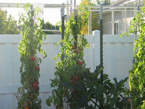 Vertical Gardening Zucchini by Pin By Larissa On Yard Garden