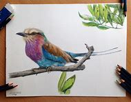 Birds with Colored Pencils Drawing