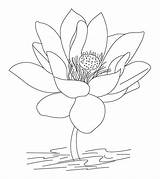 Coloring Pages Flower Lotus India Countries Printable Momjunction Calculator Birth Date Learn Toddler sketch template