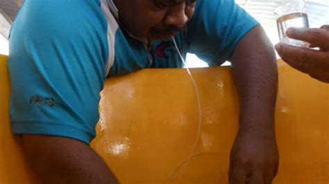 grouper eggs spawning terengganu fisherman millionaire turns besut breeder bernama oct fish