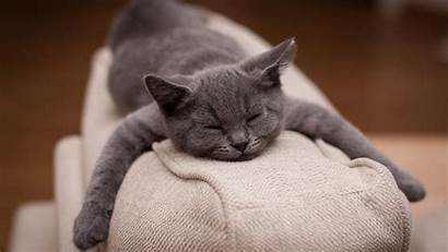 Sleeping Cat Wallpapers Desktop Widescreen Wallpapermaiden