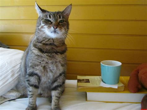 Funny Coffee Cat Pictures Small Oval Wood Coffee Tables Barista Roasters Price In Pune Owner French Glasses Locations Latte Patna