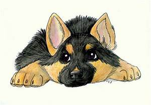 German Shepherd Drawing Puppy Google Search German