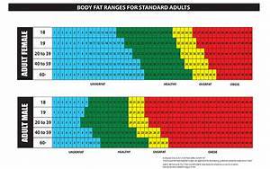 Muscle Loss With Age Chart Why Measure Body Fat Nuyou