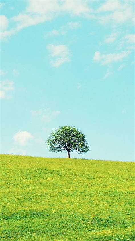 lonely tree green spring field iphone  wallpaper hd