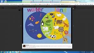 Land And Water Animals Venn Diagram