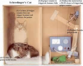 schroedinger s cat schr 246 dinger wave equation