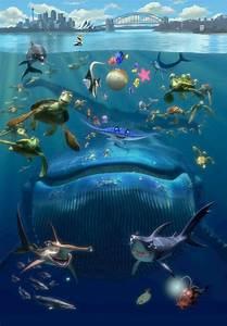 Image Gallery Nemo Whale