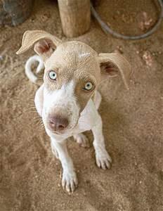 Green Eyed Beach Dog | Flickr - Photo Sharing!