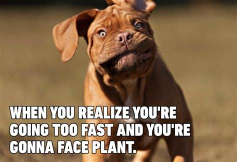hilarious dog memes youll laugh   time reader