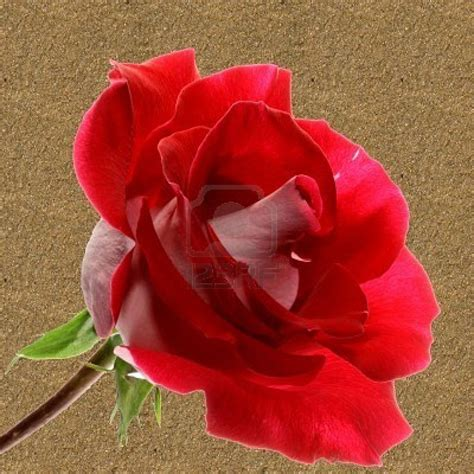 roze and roze