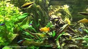 Fische Aquarium Hamburg : aquarium fische wasserpflanzen und zierfische im 100 cm ~ Lizthompson.info Haus und Dekorationen