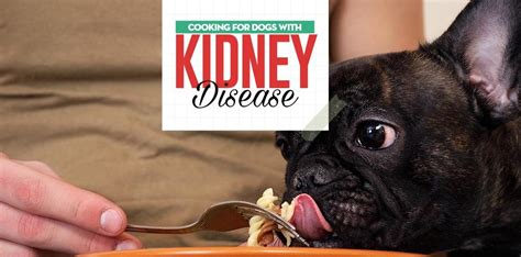 dog kidney disease diet  evidence based guidelines