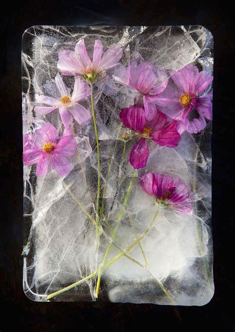 Beautiful Pictures Of Frozen Flowers  Fubiz Media