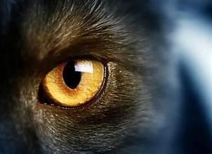 Cat Blood Vessels