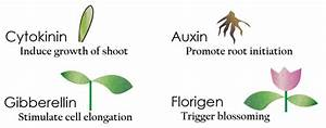 Plant Growth Regulators- Types and its Role in Plant ...