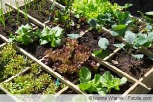 Salat Pflanzen Abstand : salatsorten in der bersicht gro e liste ~ Markanthonyermac.com Haus und Dekorationen