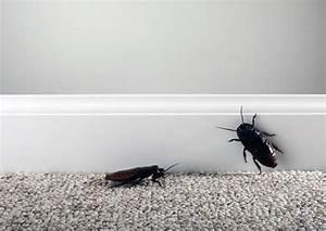 Woher Kommen Kakerlaken : wo sind die kakerlaken in der wohnung die hauptgr nde f r das auftreten methoden des kampfes ~ Eleganceandgraceweddings.com Haus und Dekorationen