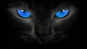 Image - Hd-wallpapers-blackblue-wallpaper-black-cat-blue ...