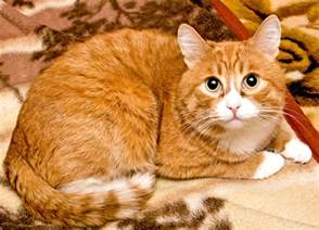 orange cats cats susmilch
