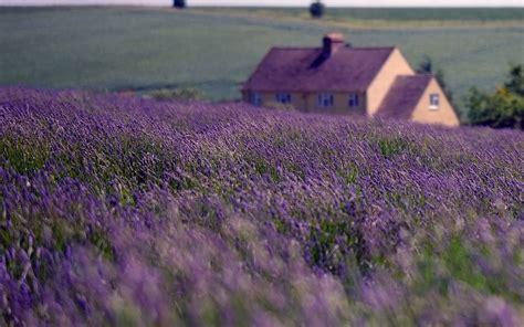 Summer Lavender Wallpapers - Wallpaper Cave