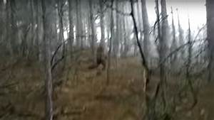"Real or Fake? Hiker video of ""Bigfoot"" in the woods ..."