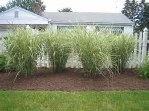 Ornamental Grass Landscaping