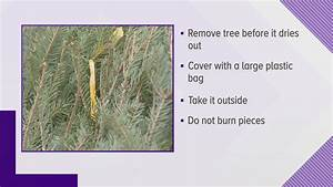 Get Rid Of Your Holiday Tree Safely In Maine