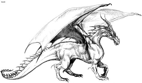 realistic dragon coloring pages  adults coloring home
