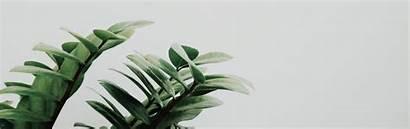 Laptop Plant Wallpapers Minimal Minimalist Aesthetic Desktop