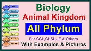 All Phylum || Kingdom Animalia || Biology - YouTube  Phylum