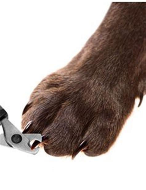 comment couper les griffes de son chien