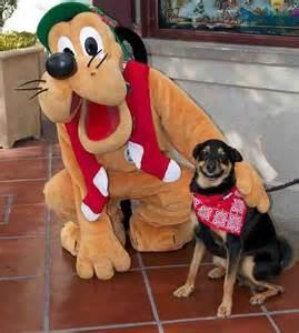 Goofy Smiling with Dog