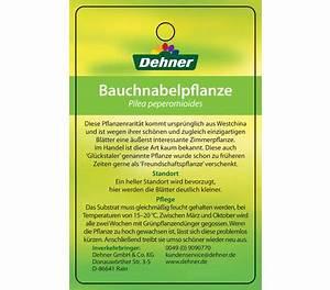 Pilea Pflanze Kaufen : gl ckstaler dehner garten center ~ Michelbontemps.com Haus und Dekorationen