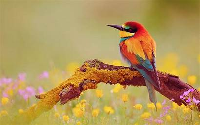 Bird Birds Pretty Nature Wallpapers Backgrounds Colorful