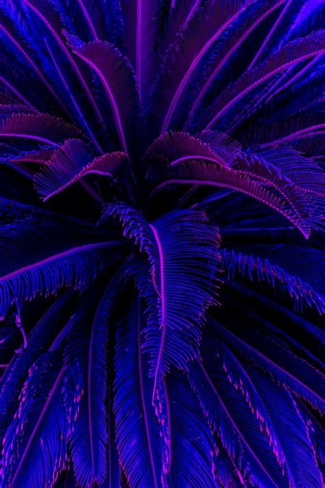 Aesthetic Neon Iphone Wallpaper by Welcome To The Wave Iphone Wallpapers Aesthetic