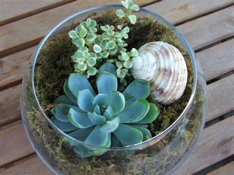 picture of succulent garden ideas