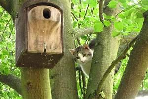 Katzen Garten Vertreiben : was hilft gegen katzen im garten best 28 images ~ Michelbontemps.com Haus und Dekorationen