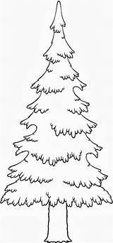 Pine Coloring Tree Trees Pages Evergreen Drawing Colouring Drawings Adult Pencil Leaves Printable Adults Dibujo Template Google Silhouette Getdrawings Getcolorings sketch template