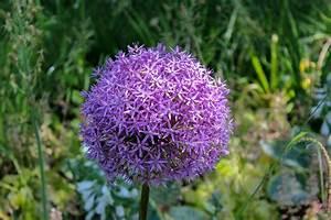 Blumen Für Schatten : blumen auf der mainau fabulatoria ~ Lizthompson.info Haus und Dekorationen