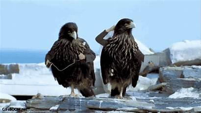 Arms Birds Bird Animals Working Re Eagle