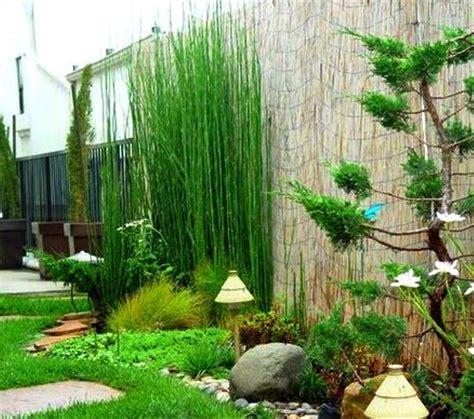 jual tanaman hias bambu air lapak newbelibungaonline